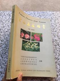 云南名花鉴赏