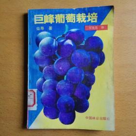 巨峰葡萄栽培