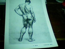 8开素描单页  男人体 靳尚谊画