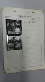 1987安徽画报样片《人工驯养灰喜鹊》