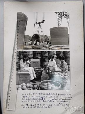 1986年,淮南平圩电厂国内口径最大的压力管+砀山县梨子丰收出口东南亚,大型老照片两种
