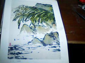 老版8开美术作品散页 1张 《水仙》(朱屺瞻)
