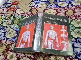 彩色版针灸解剖图