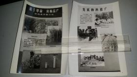 1964怀远县苏集公社《敢于革命,黄麻高产,》《先试种在再推广》《不会种麻学种麻》《实践出科学》宣传老照片。一套四张