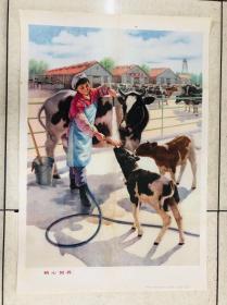 1976年年画上海人民出版社(精心饲养)对开
