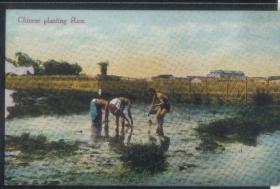 老明信片,清代民国时期民俗明信片,捉鱼民俗