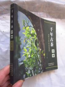 千年古茶百图 温泉乡古茶树普查掠影 全铜版纸彩印一照片一描述