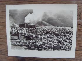 老照片:【※ 1982年,甘肃省肃南裕固族自治县,牧民在放牧 ※】