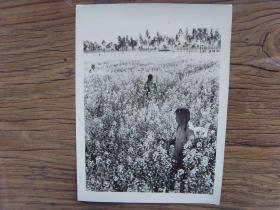 老照片:【※ 1982年,云南玉溪县北城公社,社员在油菜田喷洒农药※】