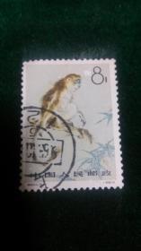 特60金丝猴3-1猴孑信销栗