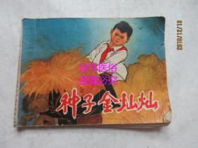 种子金灿灿——邓二龙,翁文忠绘画