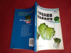 十字花科蔬菜病虫原色图谱