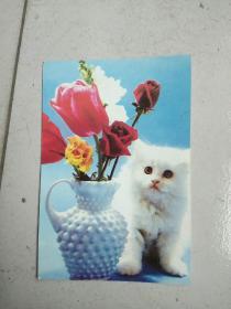民信片:花瓶与猫咪