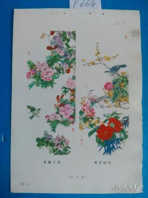 宣传画、年画(年画缩样)芙蓉小鸟 茶花斑鸠