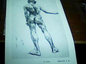 8开素描单页  男人体 关捷画
