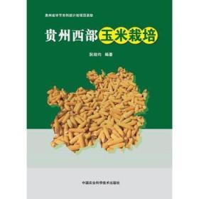 贵州西部玉米栽培