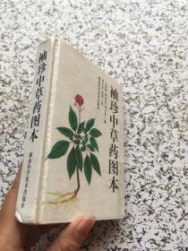 袖珍中草药图本