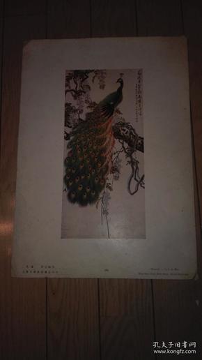 8开珂罗版花鸟画一张;孔雀/许士骐 作。38x27cm。上海文华美术书店印行。序号;30