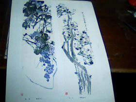 老版8开美术作品散页 1张 画页:葡萄、玉兰-颜梅华作