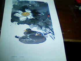 老版8开美术作品散页 1张 花脸鸭荷花-邱受成作