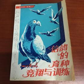 信鸽的育种竞翔与训练