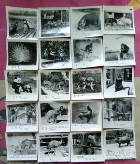 珍禽异兽照片20张
