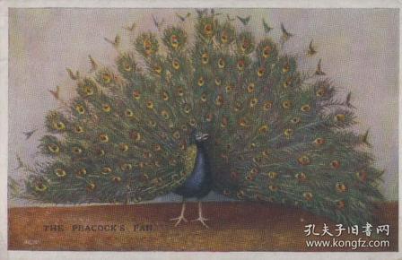 老明信片,蓝孔雀清代民国时期明信片