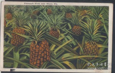 老明信片,清代民国时期明信片,水果菠萝