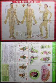 健康疗法挂图 标准经穴部位图◇