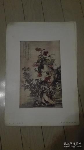 8开珂罗版散页一张;画菊/恽南田作。38x27cm。上海古今名画出版社印行。序号;B【105】