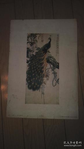 8开珂罗版花鸟画一张孔雀/许士骐 作。38x27cm。上海古今名画出版社印行。序号;B【113】