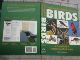 BIRDS 鸟