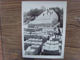 老照片:【※ 1982年,山东省夏津县丰收的棉花 ※】