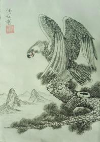 苍鹰【纯手绘钢笔画】