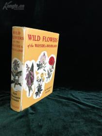 植物图鉴 彩图《WILD FLOWERS OF THE WAYSIDE AND WOODLAND》【英文精装古董书】近四百幅精美插图【货号K0011】