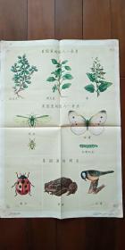 1960年出版印刷 彩色宣传画 2开 《菜园里的敌人和朋友》蒋风白  绘 有少许水渍
