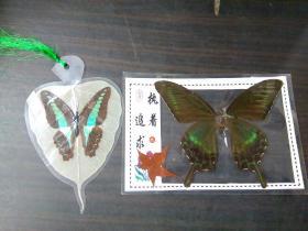 蝴蝶标本 两合售