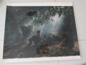影展作品之二——《甜蜜》——承包之后.......——特大照片——60*50厘米