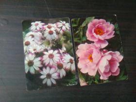 日历:带花图案:(瓜叶菊、牡丹) 1978年