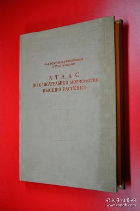 高等植物形态学 表茎根 俄文原版1962年版印