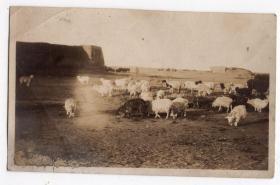 民国报纸图片类----民国原版老照片--1930年前后时间,塞外长城和羊