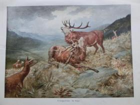 【现货 包邮】1890年彩色平版印刷画《鹿王争霸》(Der Sieger)  尺寸约41*29厘米  (货号601113)