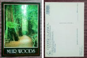 外国明信片,美国原版,旧金山红木森林公园,品如图