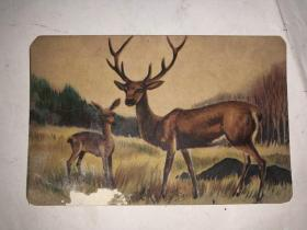 民国老画片 鹿