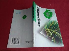 水稻优质高效栽培----新世纪浙江特色农业丛书