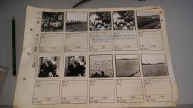 1966年桐城徐河公社文革时期原版照片贴页两页