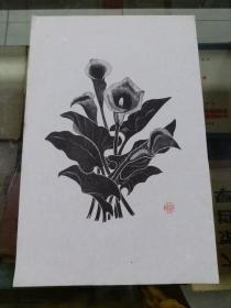 60年代朵云轩 刘岘木刻花卉版画 单张马蹄莲