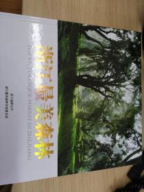 浙江最美森林
