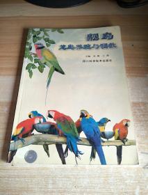 靓鸟:笼鸟养殖与调教