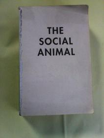 The Social Animal: A Story of How Success Happens   英文原版  社会动物    缺前封